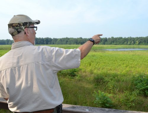 Why is Wetland Management important?