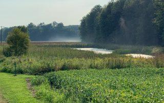 freshwater wetland restoration