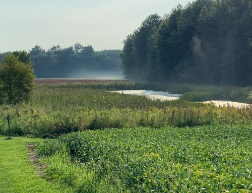 An Introduction to Freshwater Wetland Restoration