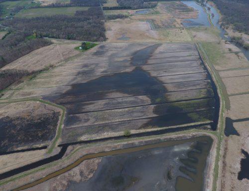 Freshwater Wetland Restoration: Part 2 – The Drawdown